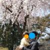 清水公園の桜と土地と坪単価と地域柄